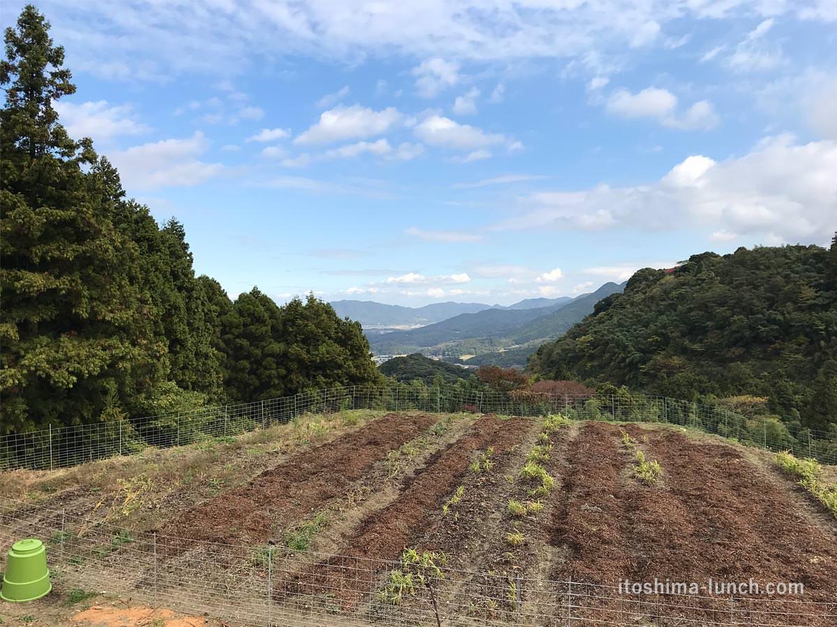写真:白糸うどん やすじから見える畑と山々の風景